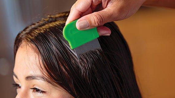 lice check